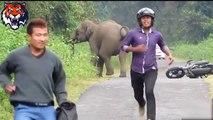 Elephants attacks human car - Animals attack human - Animals attacks videos