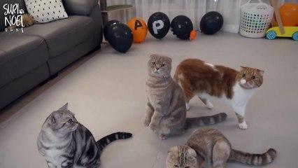 [Iz special] The various sounds of Meow [이즈 특집] 기분별 목소리 야옹-