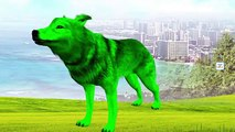 3D Wolf Colours Songs ,  Colours Song For Children ,  Fun Colours Rhymes For Children ,  Colors Wolf