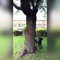 Ce chien court après un écureuil. Mais ce que fait est dernier est incroyable !
