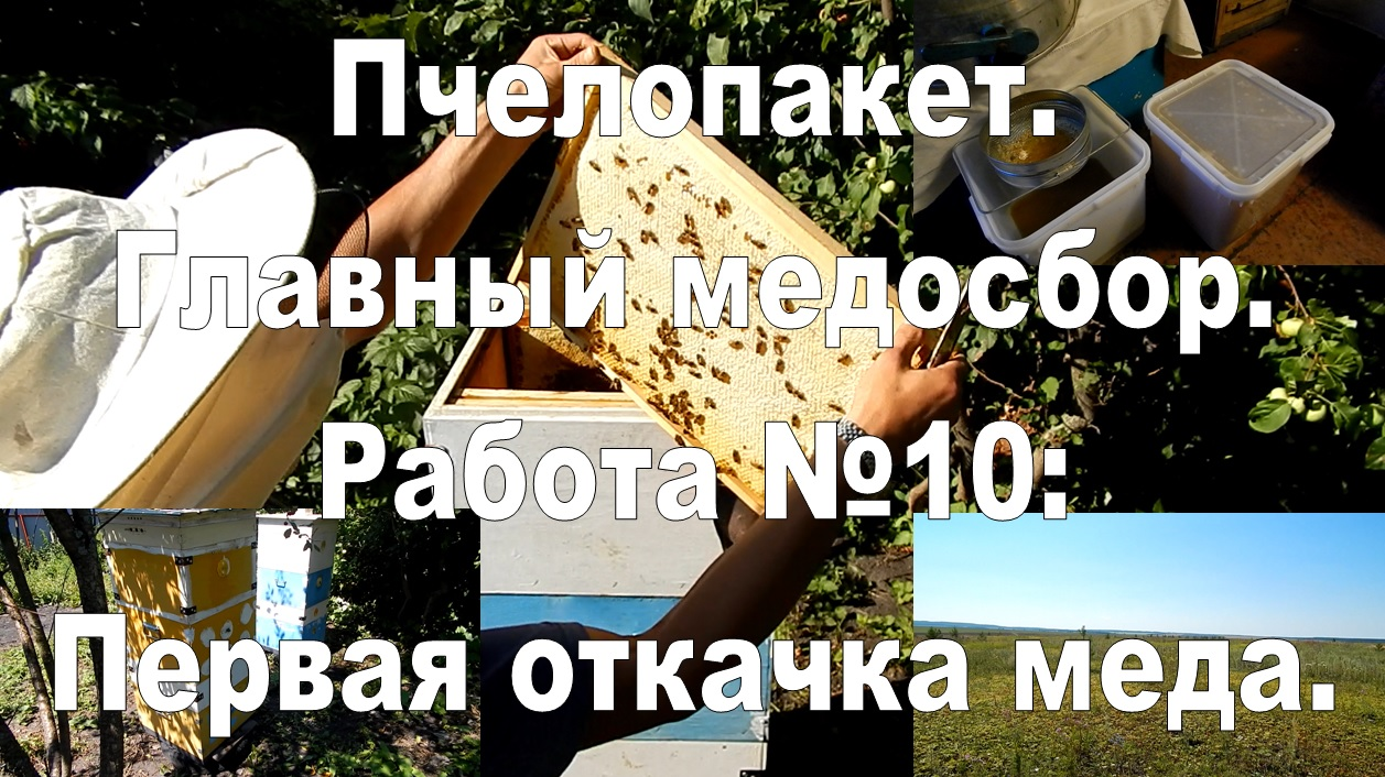 Bee packages. The main honey yield. Work №10: first pumping honey.