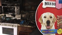 Anjing menyebabkan kebakaran, membunuh satu kucing peliharaan - Tomonews