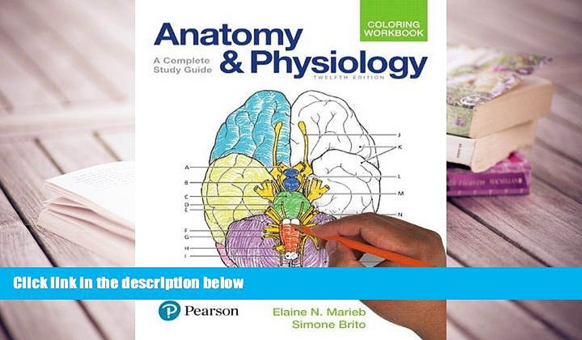 PDF Anatomy and Physiology Coloring Workbook: A Complete Study Guide (12th  Edition) For Kindle