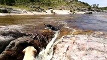 Un chien sauve son pote dans une cascade