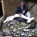 World Most Dangerous Snakes -Men Play To Snake Unbelivable Video