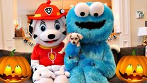 Halloween Dogs Paw Patrol and Cookie Monster Trick or Treat Adult Dogs in Real Life