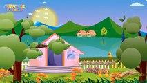 Les animaux | Comptines et chansons pour enfants | Les petits poissons dans leau etc.