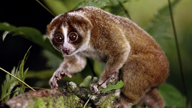 10 Incredibly Cute Animals That You Never Even Knew Existed
