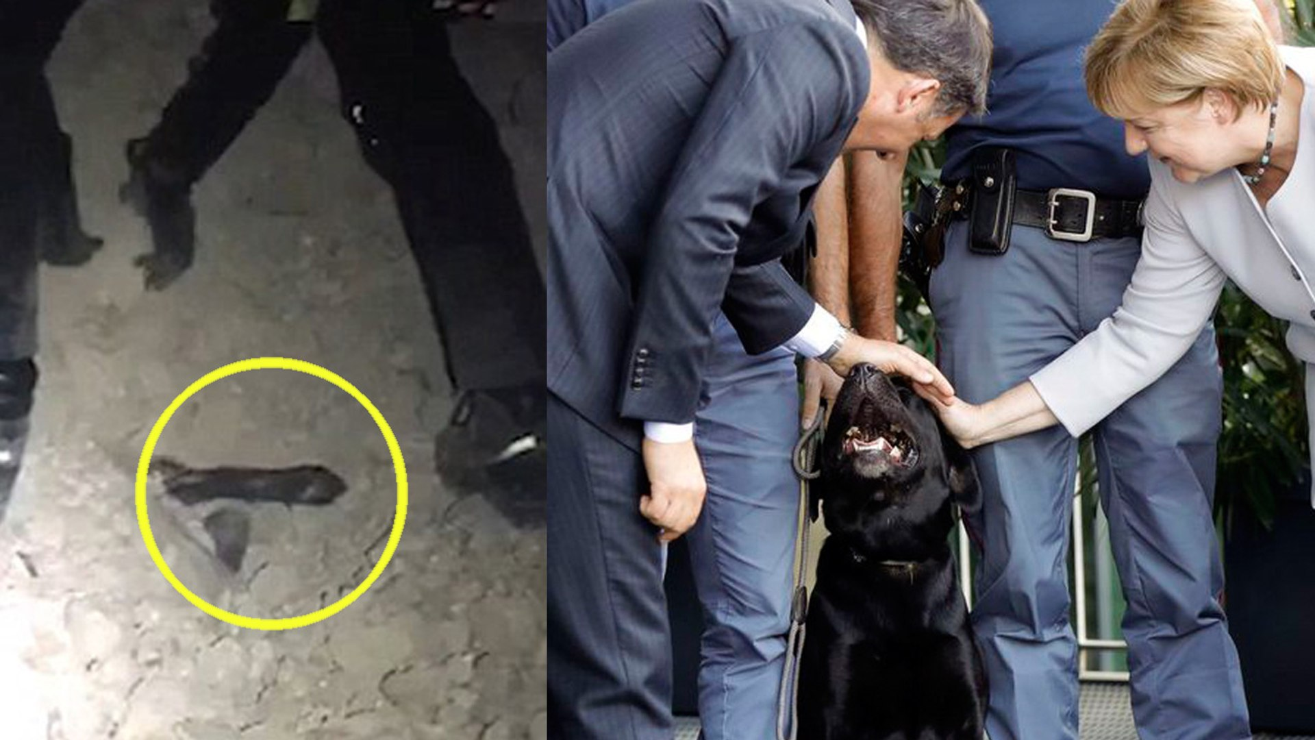 Dog Pulled from Rubble after 6.6-Magnitude Earthquake In Italy