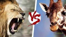 Animal Fights to the death in the wild - Top 10 CRAZIEST Animal Fights Caught On Camera - Full HD