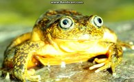 Top 18 Newly Discovered Species Animal Species