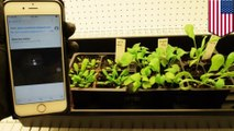 Spinach plants modified with nanotubes can detect bombs