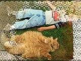 Песенка Рыжий кот. Любимые детские песни, песни для детей, песенки для малышей