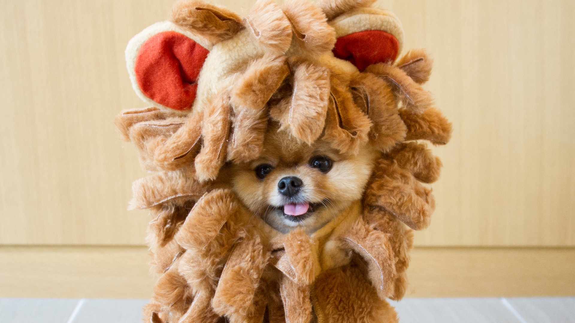 When Jiffpom's Halloween Game is Better Than Yours