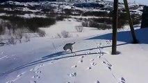 Un chien glisse sur la neige