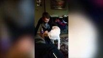 Piégé par son propre chien...