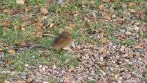 Rodent, Rats, Mice Exterminator Vancouver BC  Alpine Pest Control Ltd