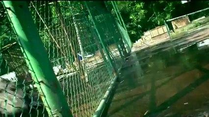 A crocodile escapes!