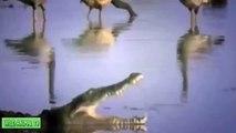 Crocodile vs Lion, Gnu, Crocodile Kills Buffalo | Real Fight Most Amazing Animals Attack H