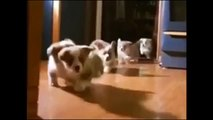 Funny Animals Dancing Video Compilation Includes Dancing Cats, Dogs and Pets to music