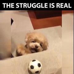 dog and boll