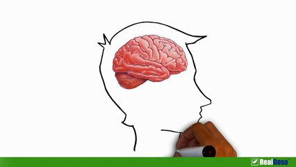 New Research- Obesity Can Shrink Your Brain - Weight Loss and Brain Health