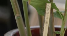 DIY : comment faire des étiquettes en bois ?