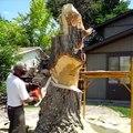 Ce que ce bûcheron fait de l'arbre qui se trouve devant chez lui est extraordinaire !