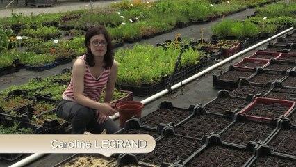 La multiplication des plantes par semis en godets