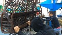 La pêche à la saint-jacques est ouverte !
