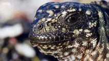 Epic Iguana trying to escape a legion of snakes with Game of thrones soundtrack (HQ)