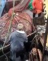 Des pêcheurs trouvent une surprise de taille en remontant leur filet