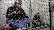 Il entre dans une cage avec un Pit Bull négligé, mais regardez bien lorsqu'il met la cuillère dans sa bouche!