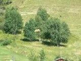 Fêtes des foin au deux Alpes 011