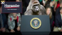 Twitter users boast about voting for dead gorilla Harambe on Twitter and post the proof