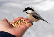 VASTU - Benefit of feeding Animals and Birds