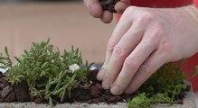 DIY : transformez une mangeoire en jardinière