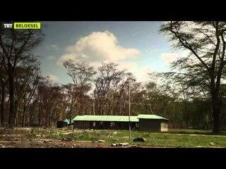 Yabancı Hayatı Keşfet - 2. Bölüm Nakuru'nun Kayıp Flamingoları - TRT Belgesel
