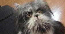 Fotoğraftaki Hayvan Kedi mi Yoksa Köpek mi?