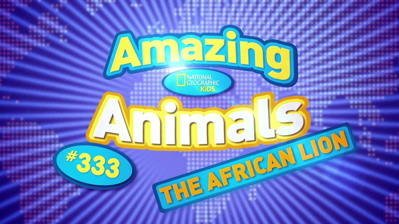 African Lion | AMAZING ANIMALS