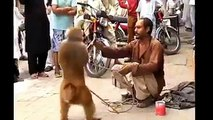 Dog and monky