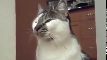 Funny talking cats   talking animals Video drôles animaux