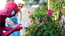 Spiderman Poisoned Vs Joker! w/ Frozen Elsa, Elsa Freezes Joker - Funny Superheroes Video