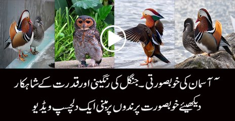 Amazing colourful birds Watch this video of beautiful birds