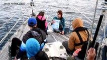 Observation de grands dauphins, de grands cachalots et de dauphins bleus et blancs au Pays Basque