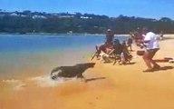 Fok Balığı Plajda Balık Tutan Adama Saldırdı