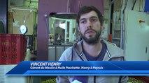 Alpes-de-Haute-Provence : La préparation de l'huile d'olives a commencé