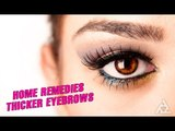 Home Remedies For Thicker Eyebrows | Best Health and Beauty Tips | Education