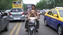 Dogs RIDING BIKES ★ Funny Dogs Drive Motorcycles! [Funny Pets]