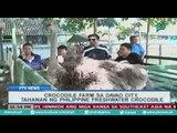 [PTVNews] Crocodile Farm sa Davao city, tahanan ng PH Freshwater Crocodile [07|27|16]